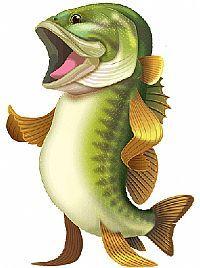 AOD Bass