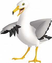 AOD Seagull