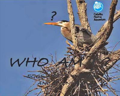 Bird ID Quiz