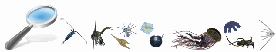 Plankton Strip