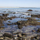 Point Fermin tidepools