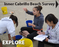 Inner Cabrillo Beach Survey